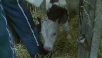 Illustrations d'un agriculteur éleveur laitier producteur de comté dans le Doubs