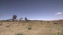 La route des grands fauves : scènes de savane entre Nairobi et le Parc du Masaï Mara