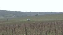 Champagne vineyards in winter
