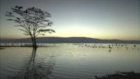 La route des grands fauves : le lac Nakuru et sa faune