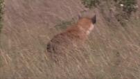 La route des grands fauves : Parc du Masaï Mara