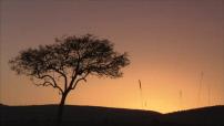 La route des grands fauves : Parc du Masaï Mara, guépard, lionnes, hyéne, élephant...