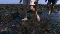Les algues, et si c'était bon ?
