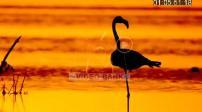 Cuba: Parc Cineaga de Zapata, mangrove, flamants roses, vautour, lever de soleil