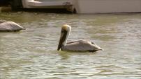 Etats-Unis : illustrations dauphins et oiseaux dans les Everglades