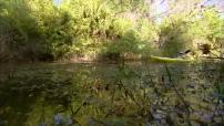 Etats-Unis / Parc des Everglades : illustrations alligator, python, mangrove