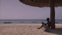 Zanzibar : illustrations cocotiers et crépuscule