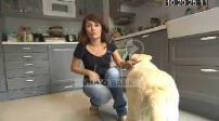 100 POUR 100 animaux : Aidez votre chien à ne plus perdre ses poils