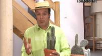 100 POUR 100 : Jardin les cactus