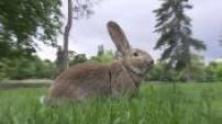 100 POUR 100 animaux : quel lapin faut-il adopter