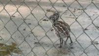 illustrations animaux zoo de Bordeaux-Pessac