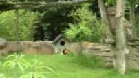 Illustrations Panda au Parc de Beauval (2)