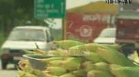 Belles images de singes sur bord de route en Inde