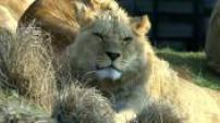 LE LE MAG :  : Les soigneurs du parc zoologique de Paris
