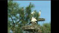 Les cigognes et autres oiseaux dans la réserve ornithologique du Teich