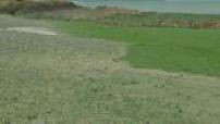 Illustration algues vertes à Hillion en Bretagne