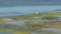 Illustrations de tourisme à l'Ile de Ré, et de l'espace préservé de la Maison du Fier