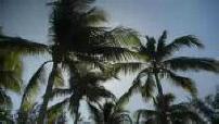 Cartes postales de La Réunion : bord de mer