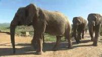 Cartes postales d'Afrique du sud : paysages / bord de mer / circulation routière / éléphants