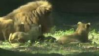 Illustrations animaux au zoo de Thoiry