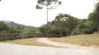 "Monkeys Shek Lei Pui Reservoir in Hong Kong, called the ""Monkey Hill"""