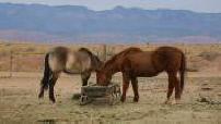 "Rehabilitation Ranch ""Three point center"" in Utah"