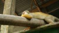 Illustrations de divers animaux d'Amazonie