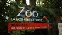 Zoo La Boissiere from outside Dore Lions, Giraffes, Watusi, ostriches, monkeys