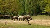 Zoo Park Thoiry rhino, hippo, Watusi, bear, lion, zebra, giraffe ...