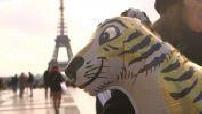 LE LE MAG :  : Bientôt l'interdiction totale des animaux sauvages dans les cirques ?