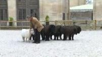 """Spectacle équestre """"Le songe d'une nuit d'hiver"""" au domaine de Chantilly : les coulisses"""