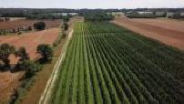 Vue aérienne d'un champ de pommiers dans la Sarthe