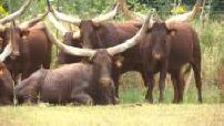 Planète sauvage zoological park: animals, works