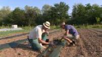 La surface agricole bio grandit de 7,5% en France