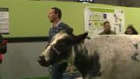 Salon Agriculture : Races nouvelles ou anciennes animales