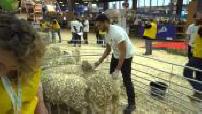 Mag : Concours du meilleur berger au salon de l'agriculture