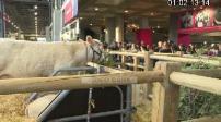 Salon de l'agriculture 2020 : les visiteurs affluent pour le dernier jour