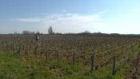 Coronavirus: winegrowers in difficulty