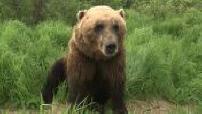 Alaska : landscapes, gold diggers, bears, deers, road traffic