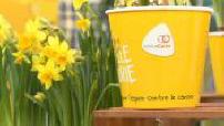OFF - Une jonquille pour curie : première journée de lutte contre le cancer