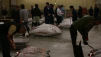 Tokyo : intérieur marché aux poissons