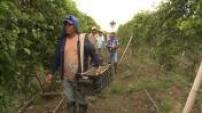 Illsutrations plantation de fruits de la passion en Colombie 02