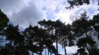 Illustrations Bois de Boulogne