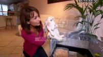 100 pour 100 : Pets Adopt a rabbit
