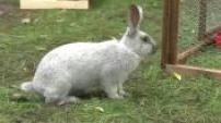 100 pour 100 : Pets install a mini farm home