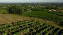 Vue aérienne de vignoble de l'entre deux mer