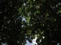 Paradis fiscal : ma retraite dorée à l'Île Maurice