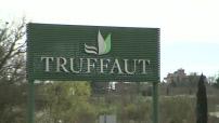 Illustrations du rayon des plantes d'extérieur de Truffaut