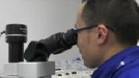Laborantin examine lamelle au microscope