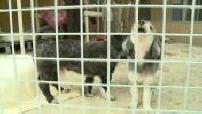 Les abandons d'animaux à la SPA se multiplient au moment des vacances